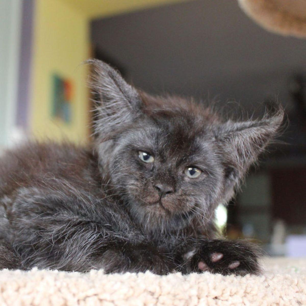 gatto-che-sorride