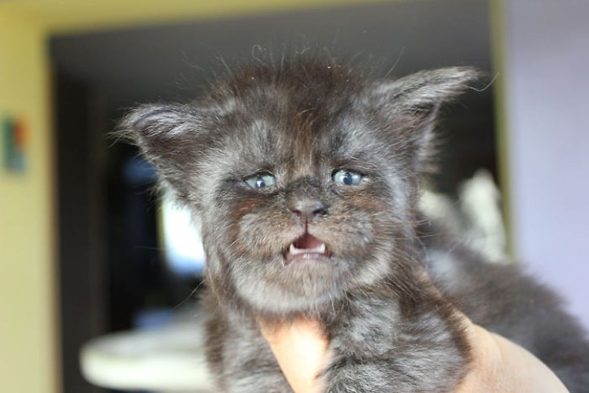 gatto-piccolo