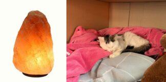 gatto-con-coperte-e-lampade-di-sale