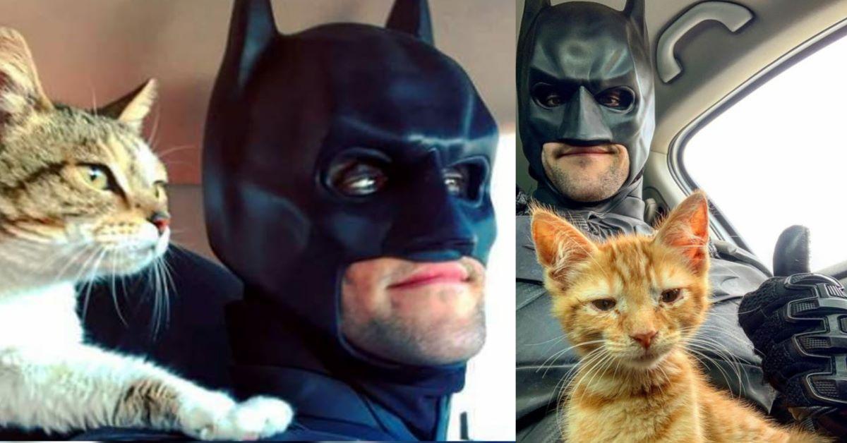 gatti-con-batman