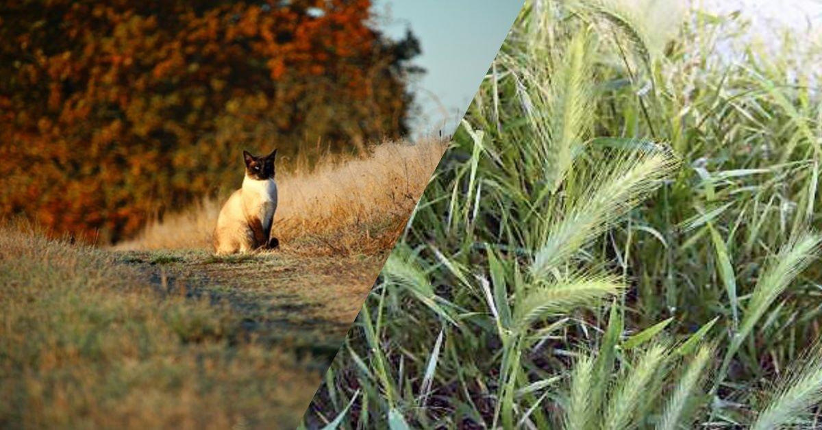 gatti-e-forasacchi