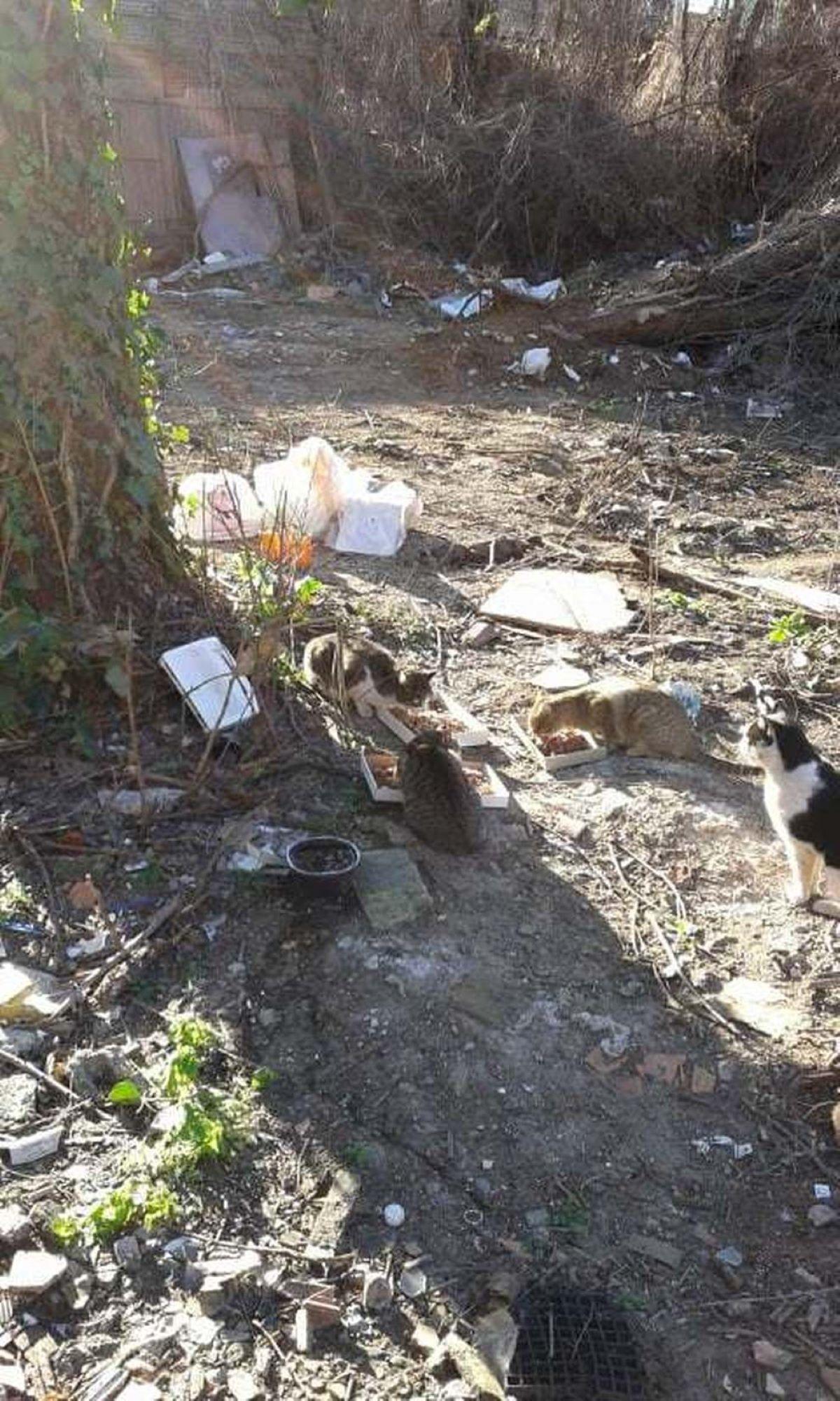 gatti-tra-spazzatura