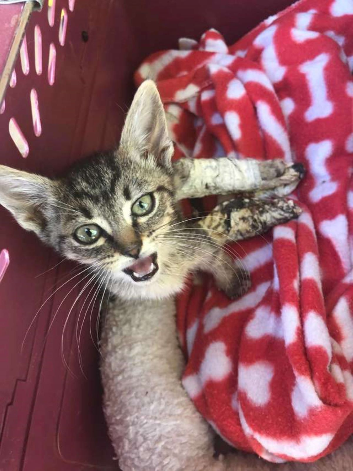 primo-piano-gatto-con-coperte