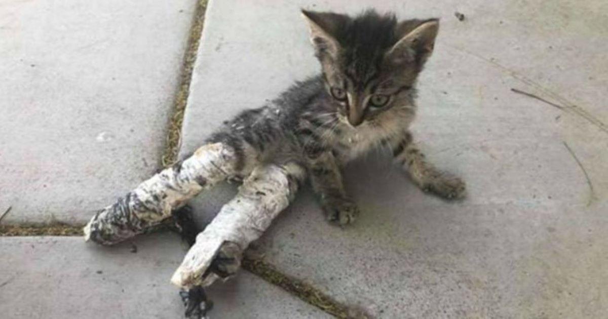 gattino- seduto-con-gesso-alle-zampe
