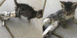 gattino-con-zampe-ingessate