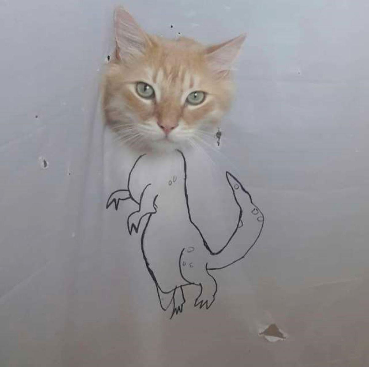testa-di-gatto-e-disegno-dinosauro