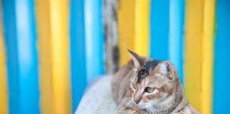 gatto che deve viaggiare