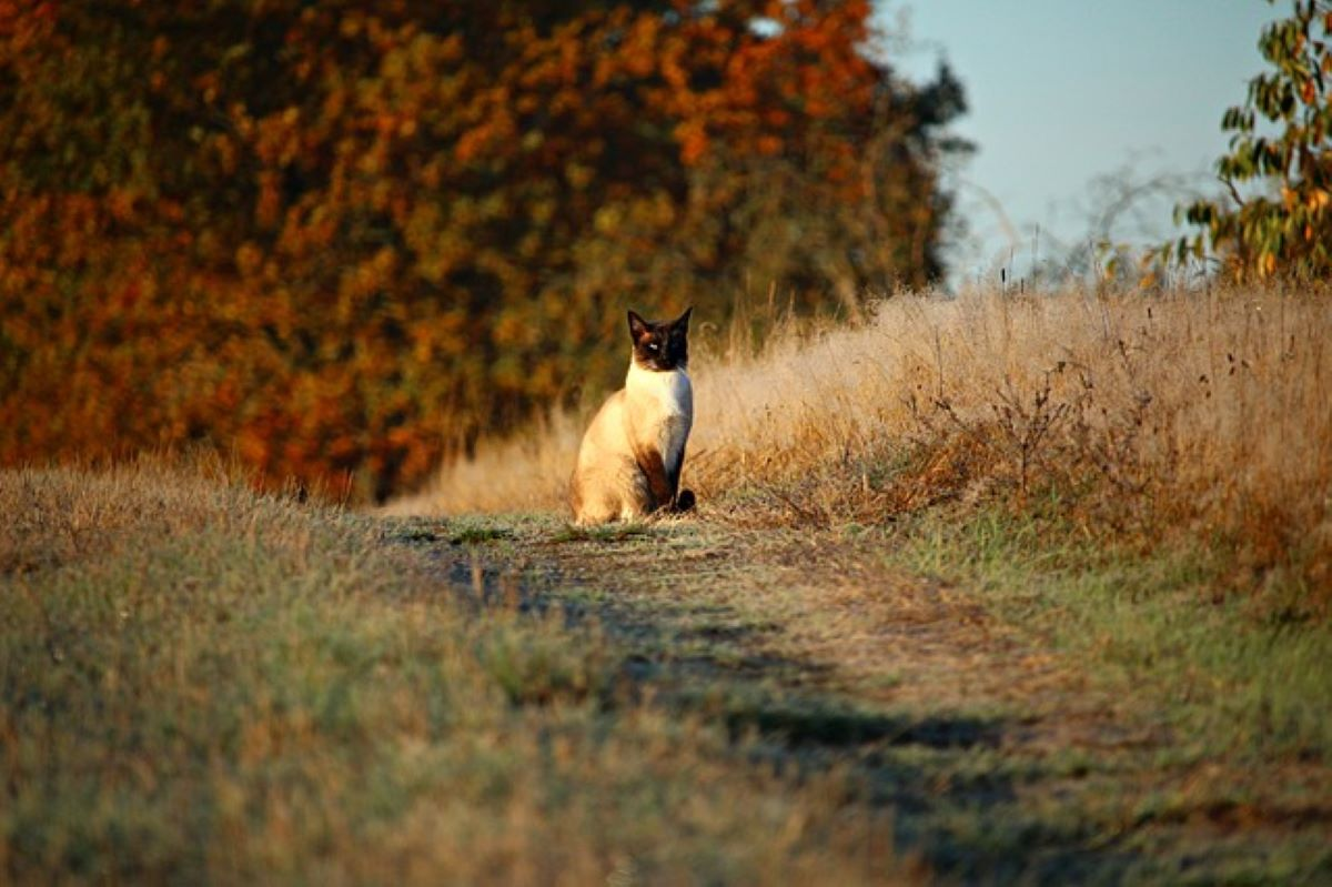 gatto-su-sentiero
