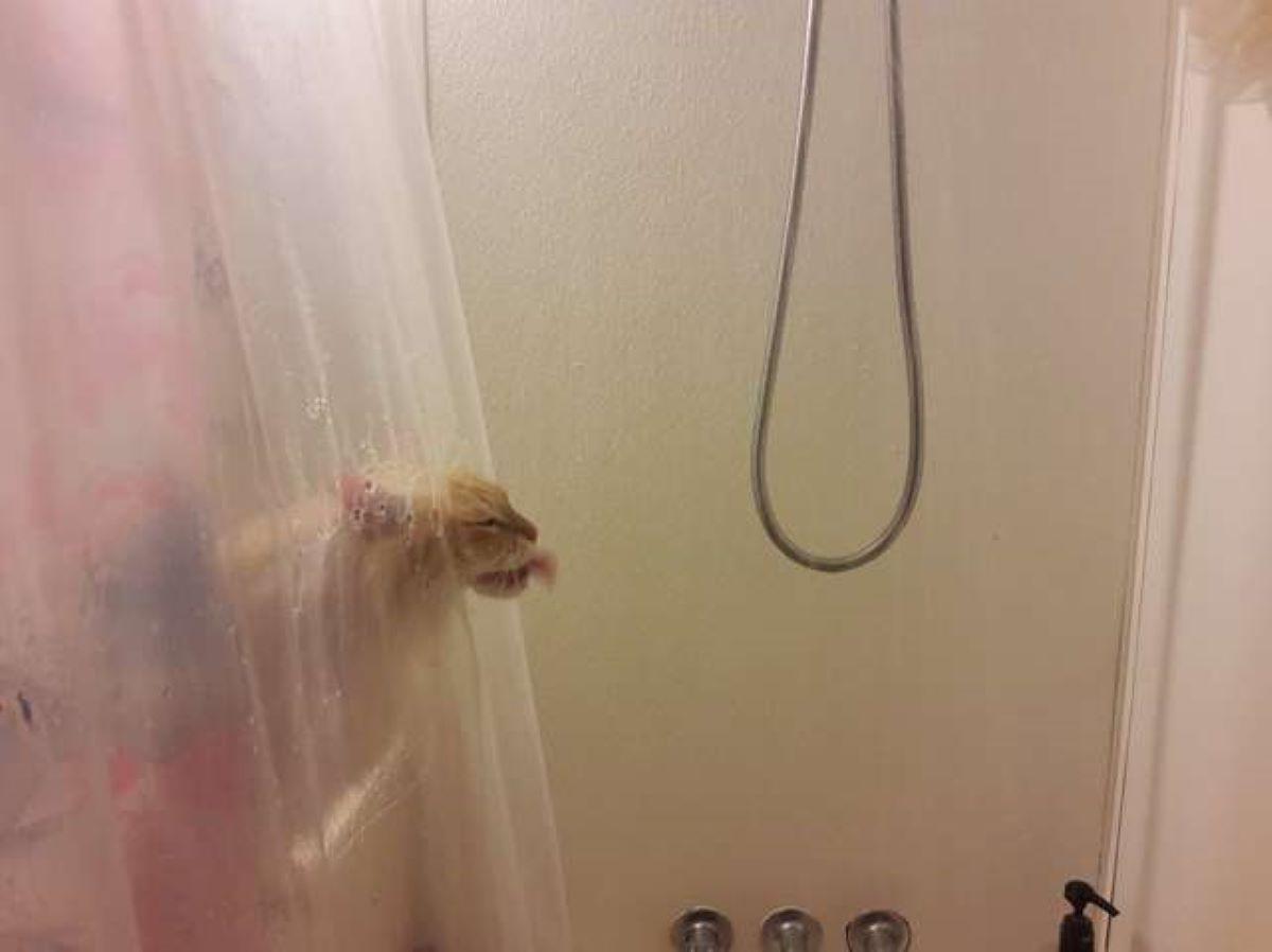 gatto-che-beve-acqua-dalla-doccia