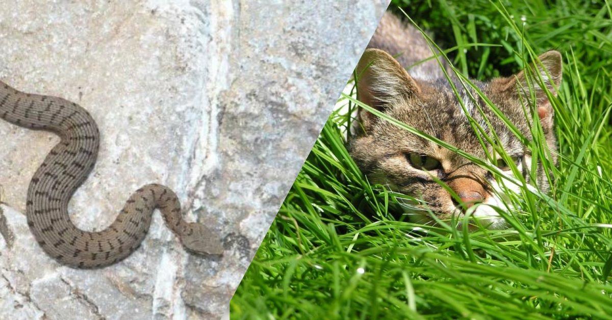 gatto-e-serpente