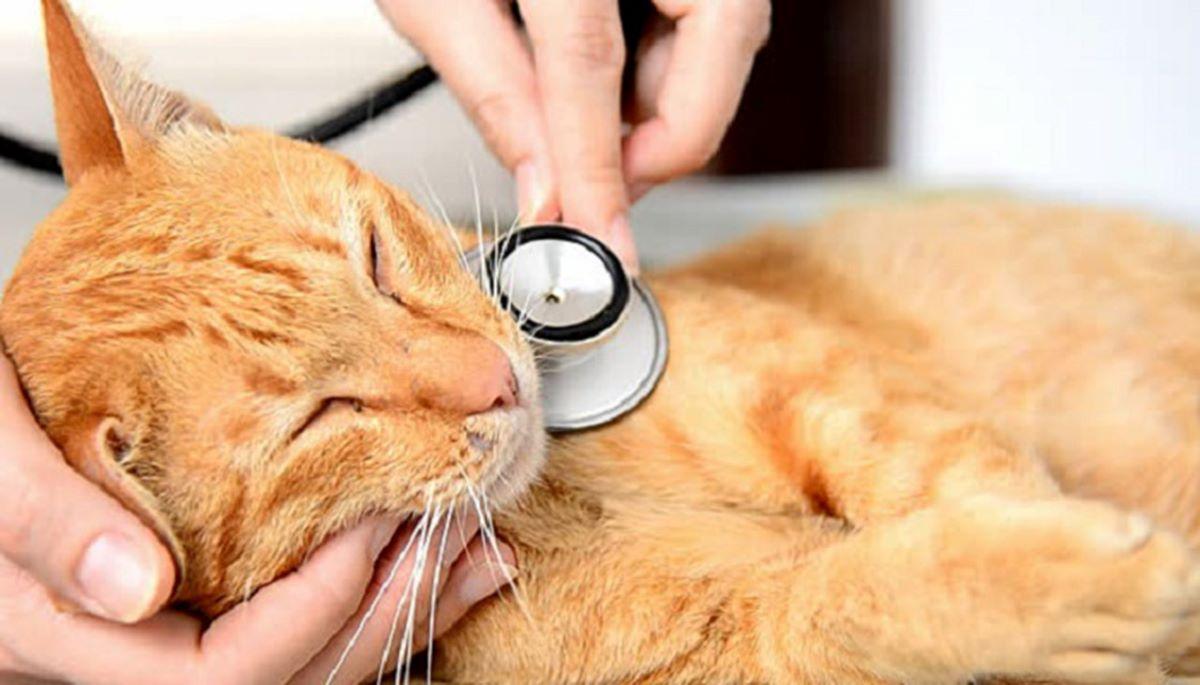 gatto-da-veterinario