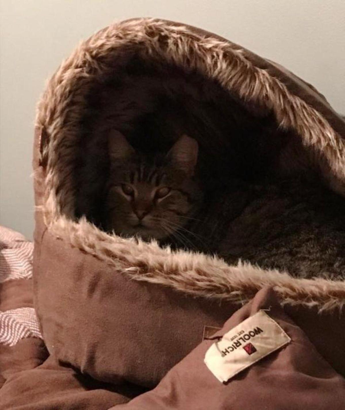 gatto-dentro-cuccia