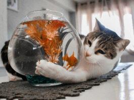 Gatto e pesce