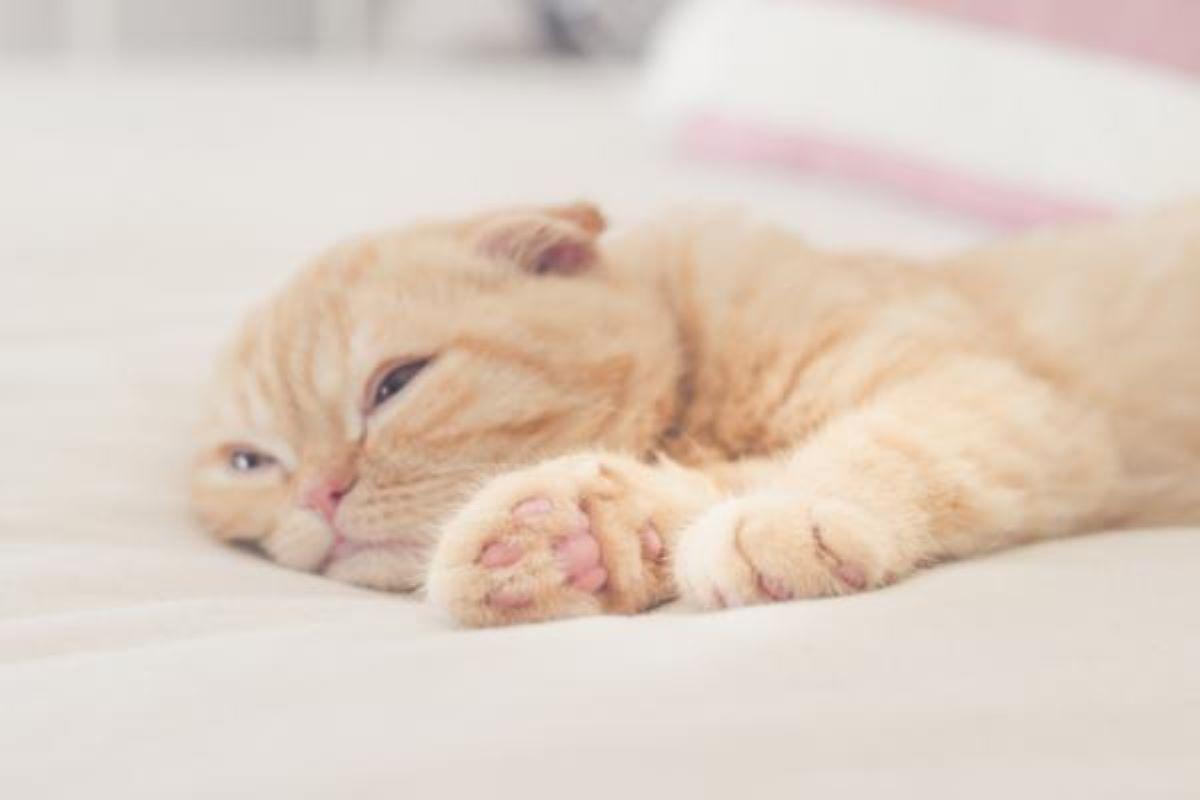 gatto-stanco