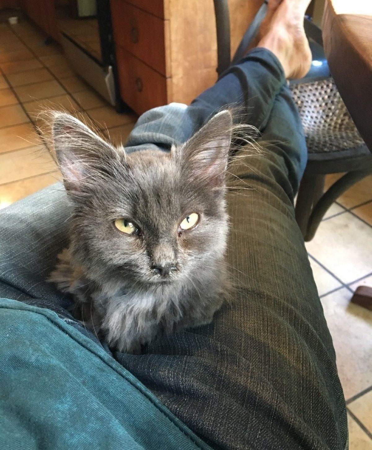 gatto-sulle-ginocchia-di-uomo