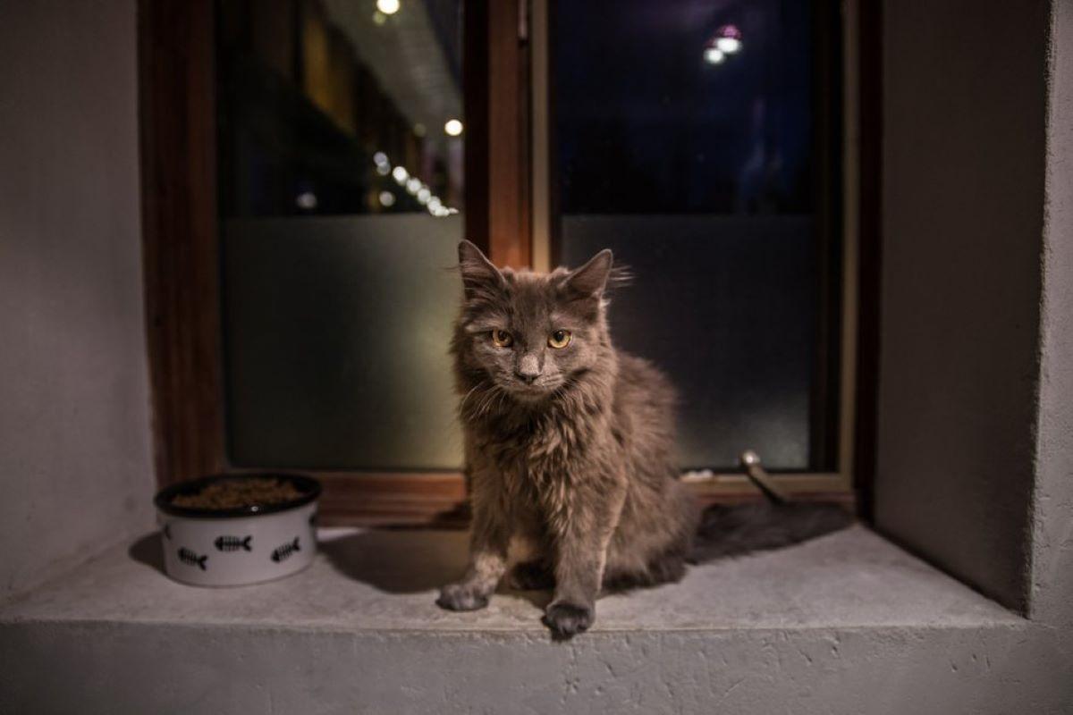 gatto-vicino-a-ciotola