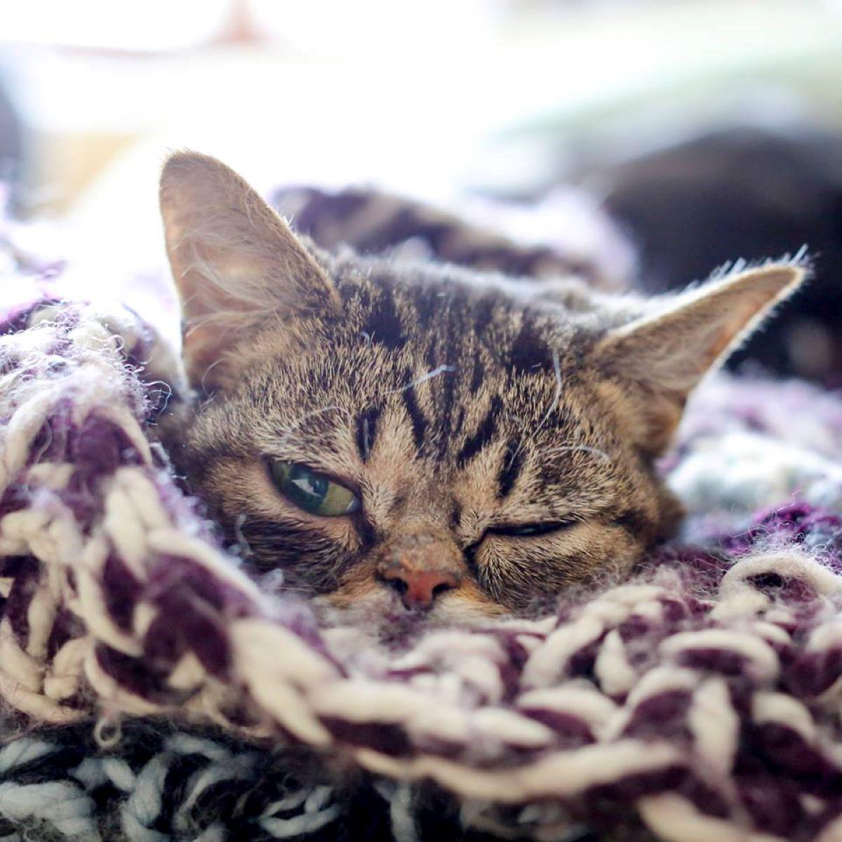 gatto-assonnato