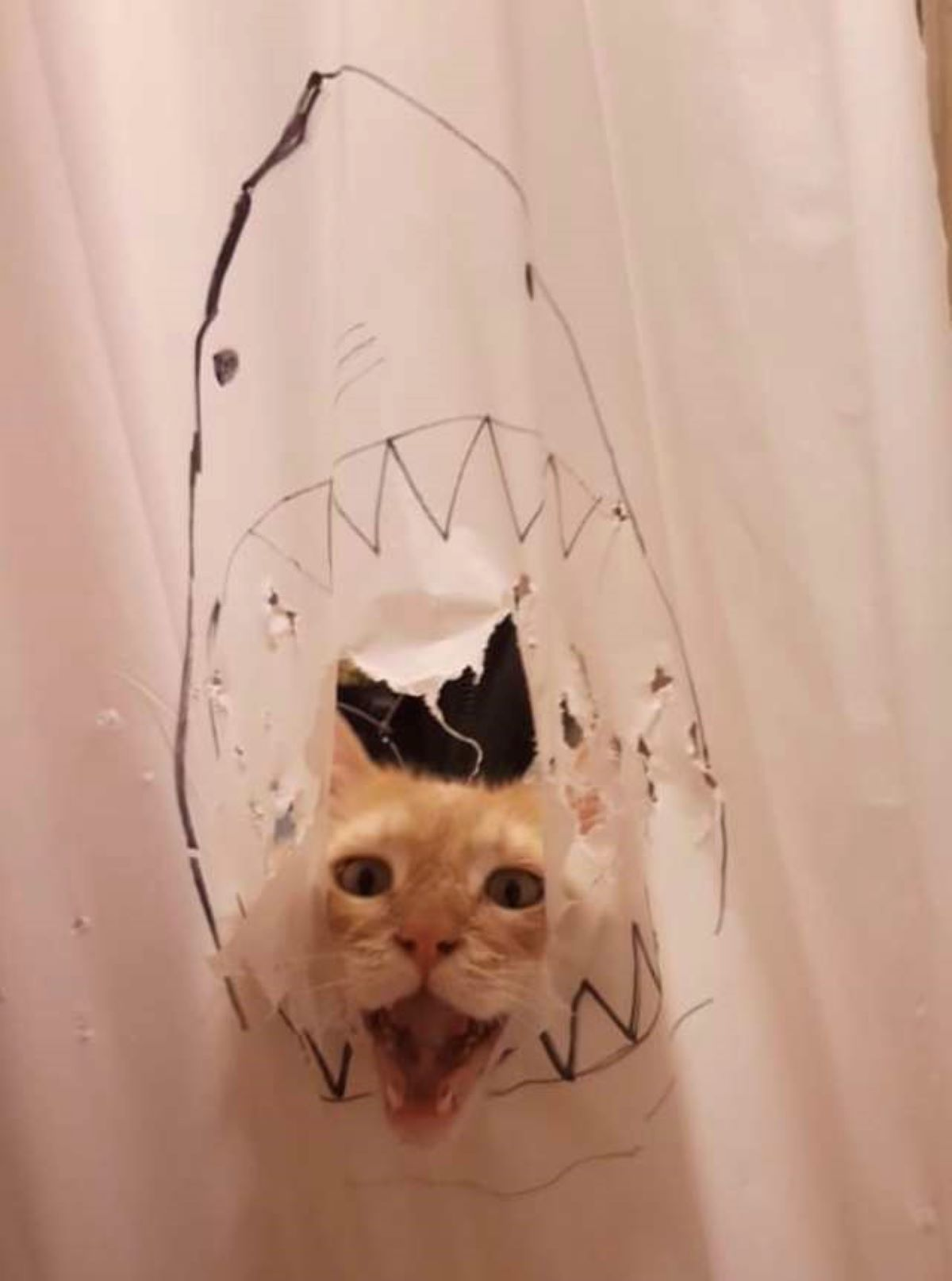 testa-gatto-e-disegno-squalo