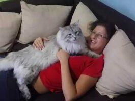 Vivere con un gatto siberiano