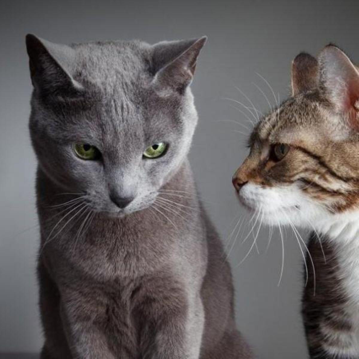 due-gatti-che-si-guardano