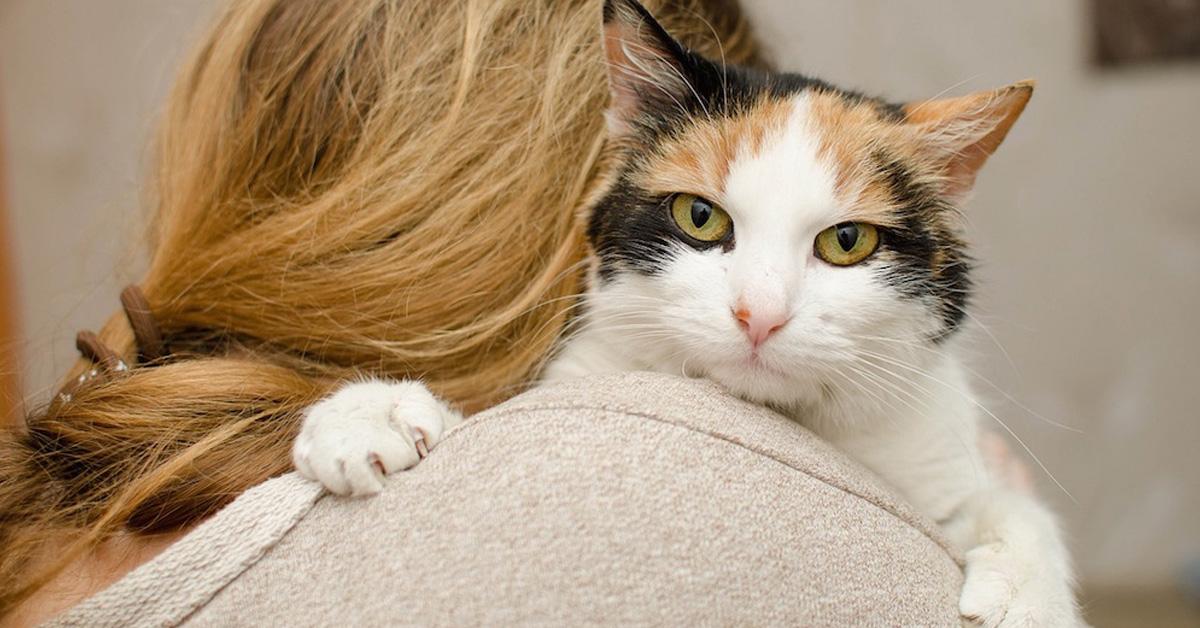 gatto-in-braccio-a-donna