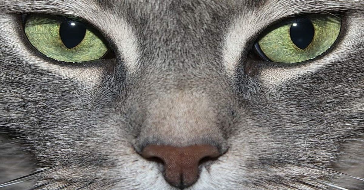 sguardo-gatto