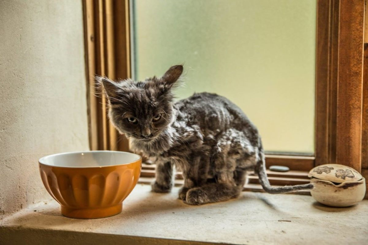 gattino-magro