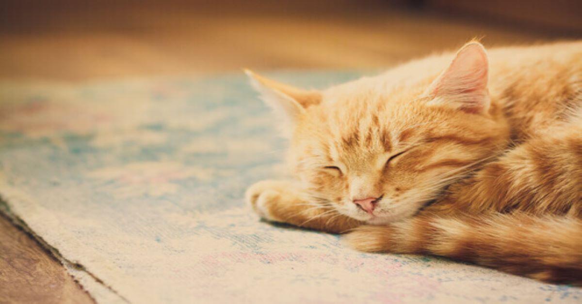 gatto-rosso-che-dorme