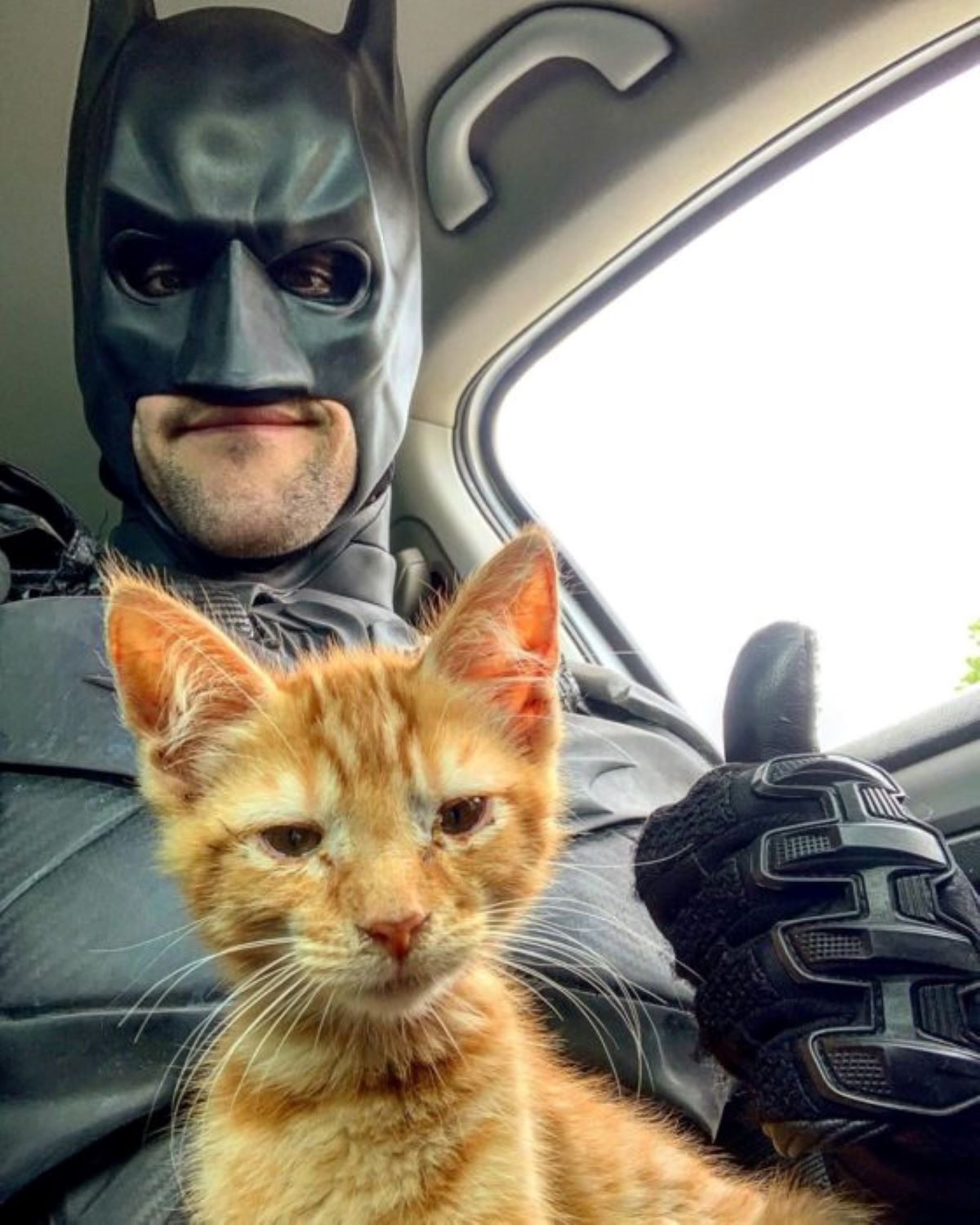 gattino-arancione-con-batman