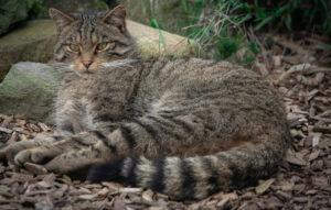 Cosa mangia il gatto in natura