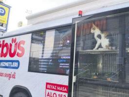 Bus di Veterinari