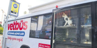 Bus di Veterinari