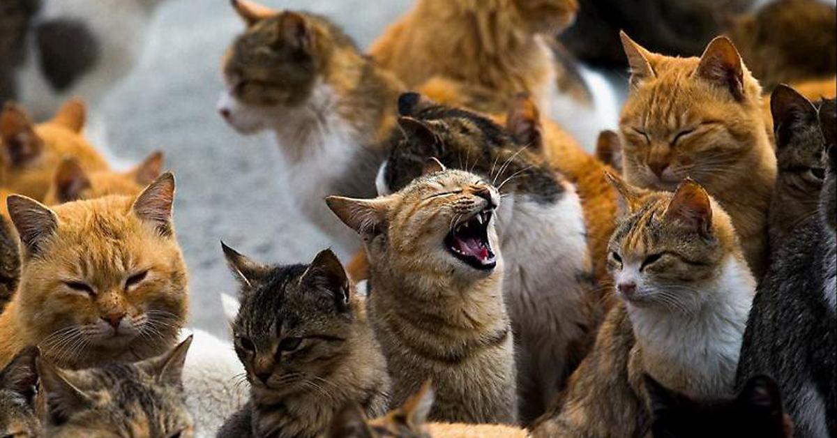 Colonia di felini