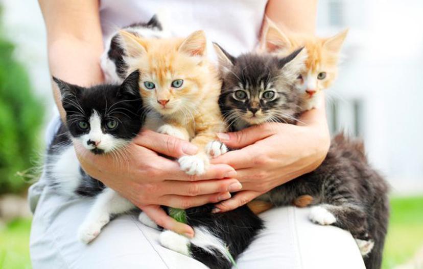 Cuccioli di gatto in braccio ad una persona