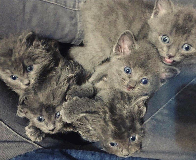 Cuccioli di gatto piccoli
