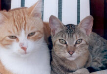 Due gatti che osservano
