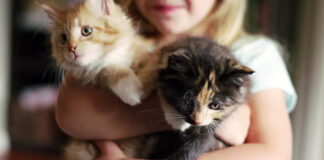 Due gatti in braccio ad una persona