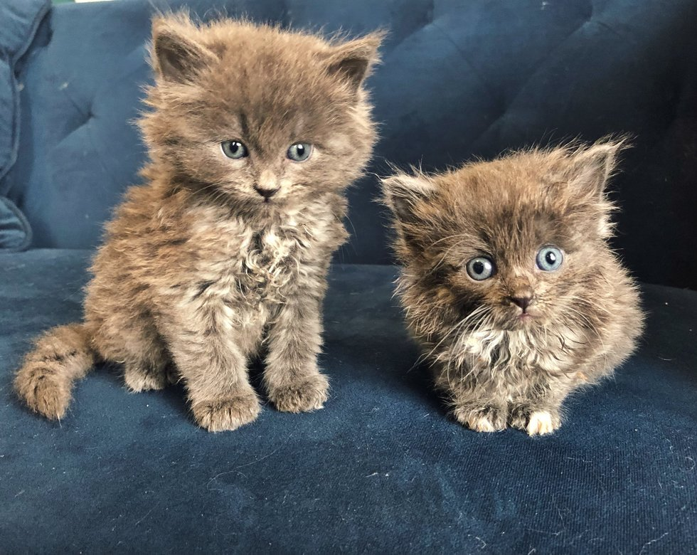 Due gatti piccoli