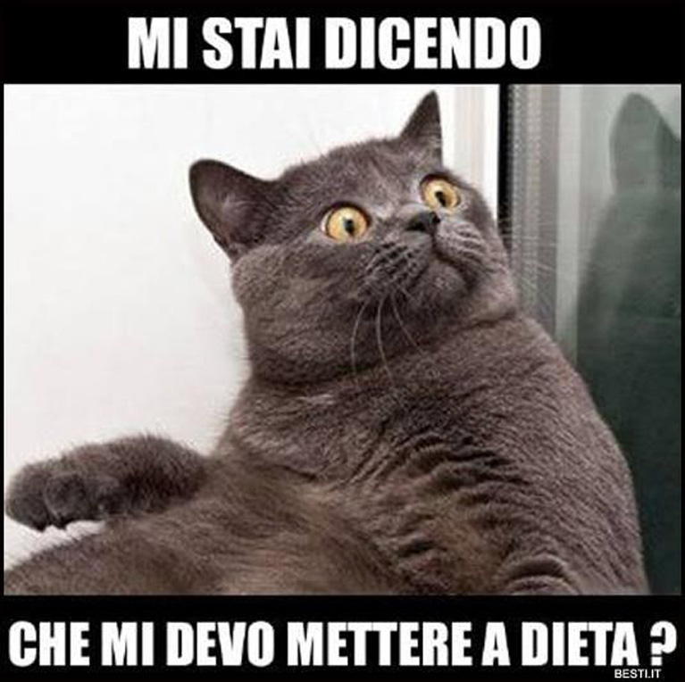 Meme Sui Gatti I Più Divertenti Il Mio Gatto è Leggenda