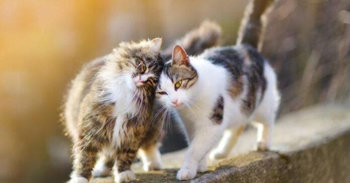Gatti che si strusciano