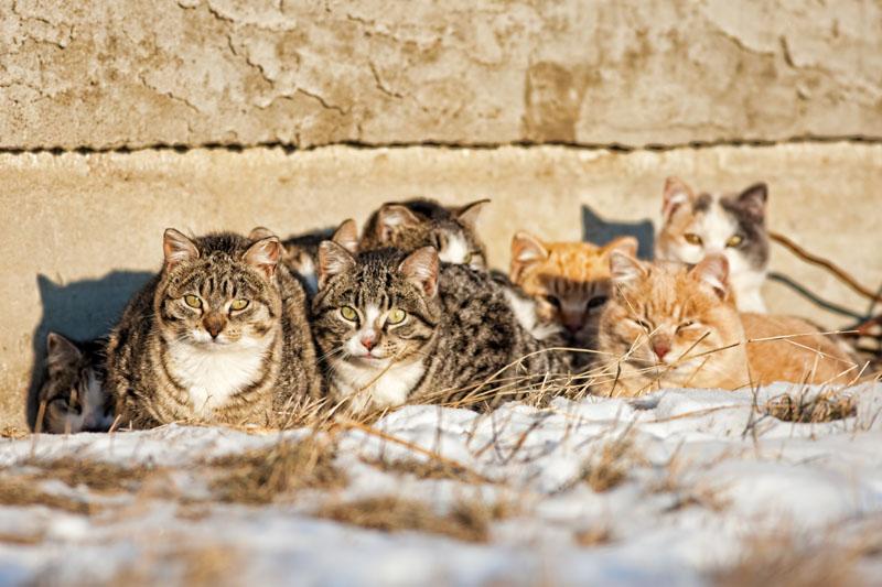 Gatti randagi che guardano