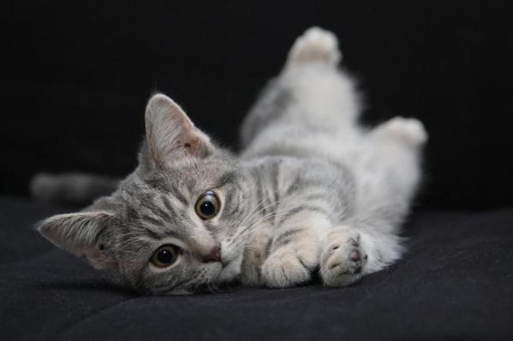 Gattino che gioca sdraiato
