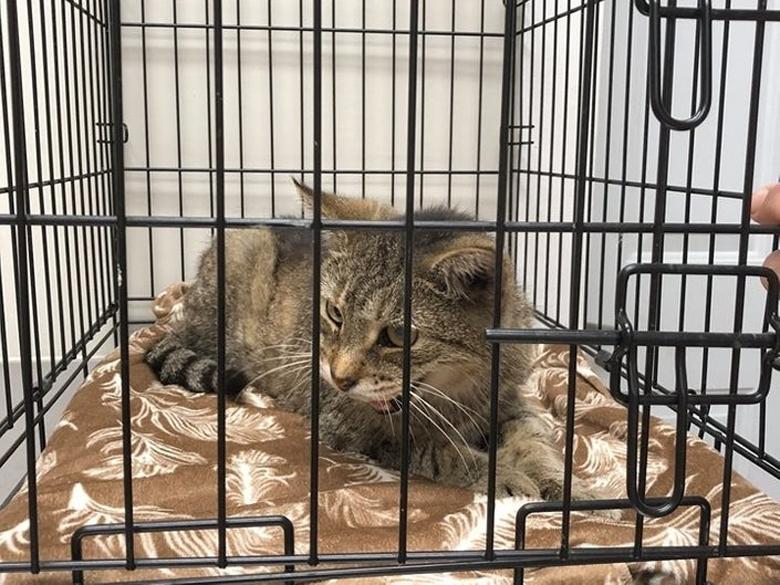 Gattino dentro un trasportino