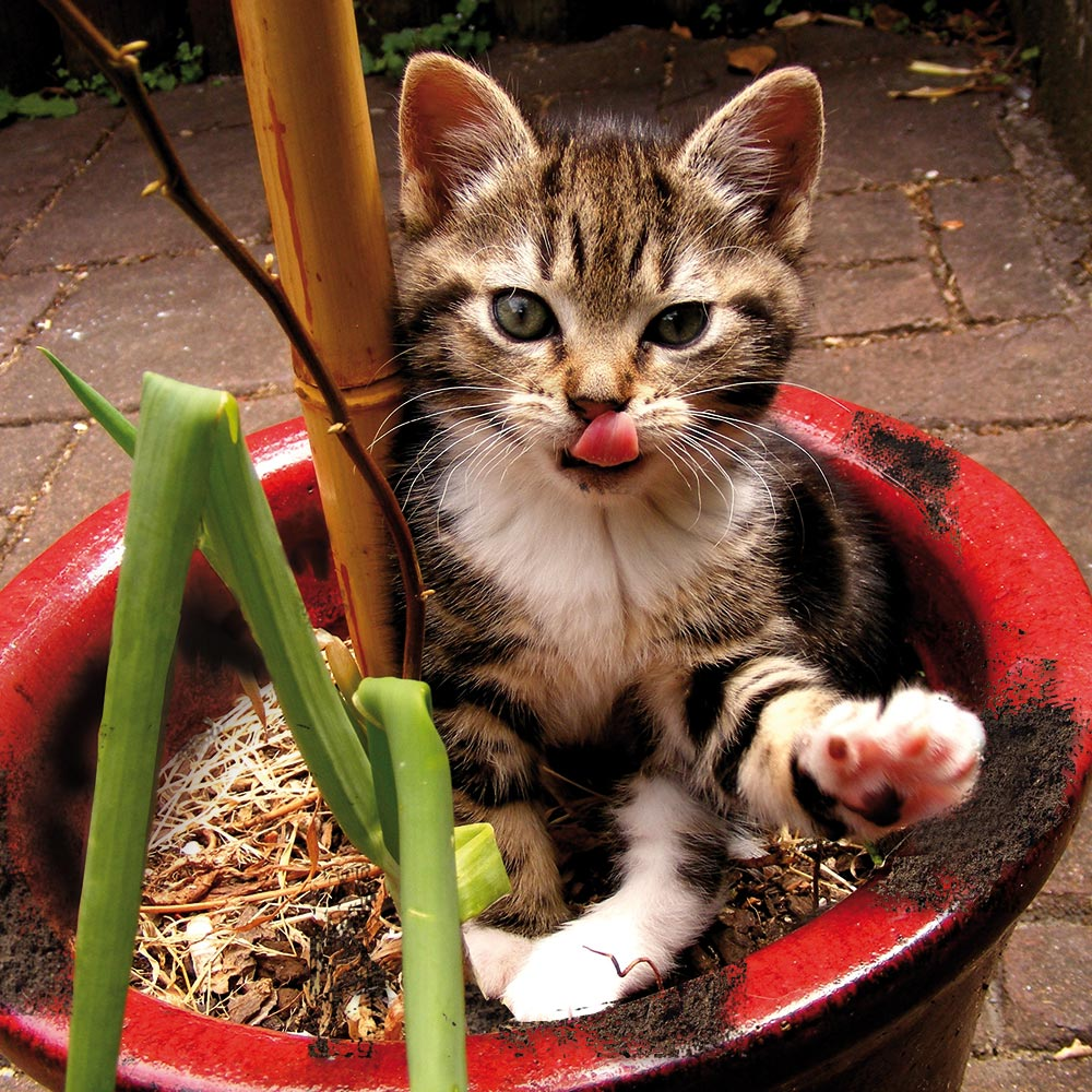 Gattino dentro un vaso