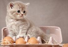 Gattino dentro una scatola di uova