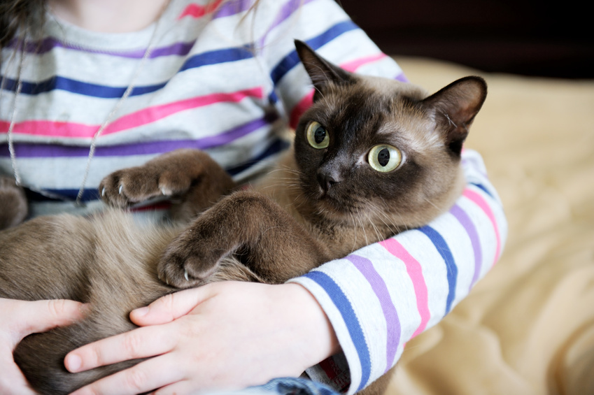 Gattino in braccio ad una bambina