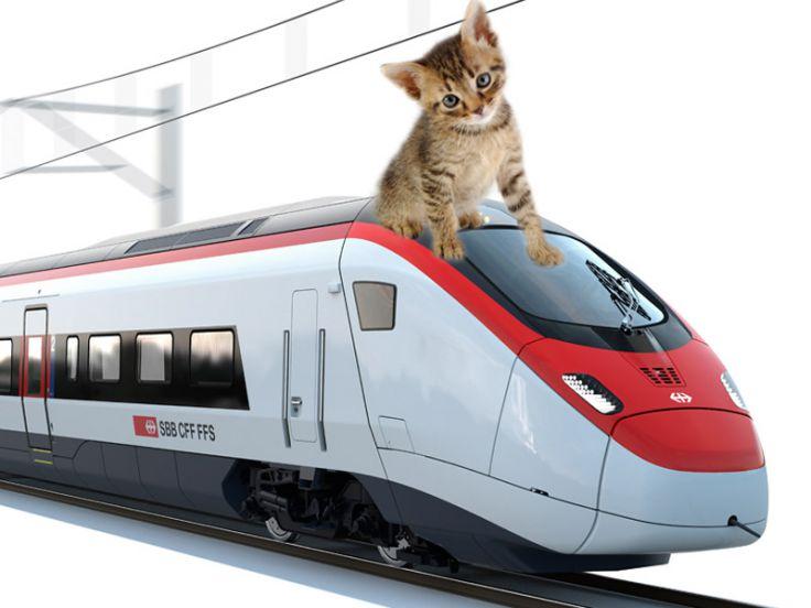 Gattino sopra un treno