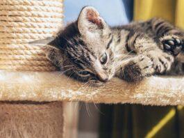 Gattino su un tiragraffi