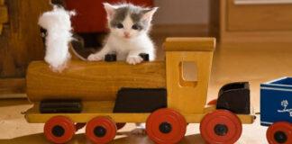 Gattino su un treno giocattolo