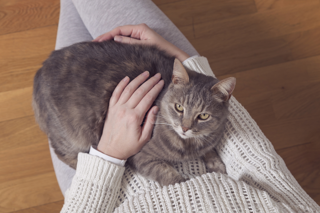 Gattino sulle gambe di una donna